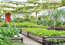 Startup opportunity in making roof floor agricultural land
